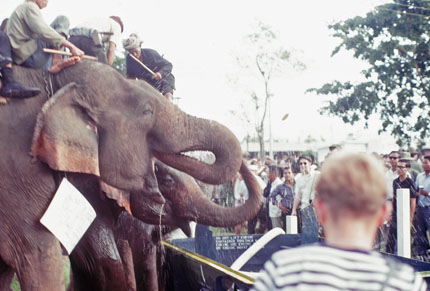Another View of Elephants Drinking Water